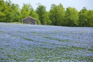 Flax grow